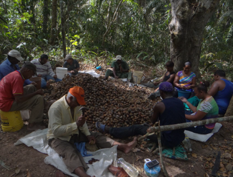 Achieving The Sustainability Of Conservation Agreements In El Caura Venezuela Panorama