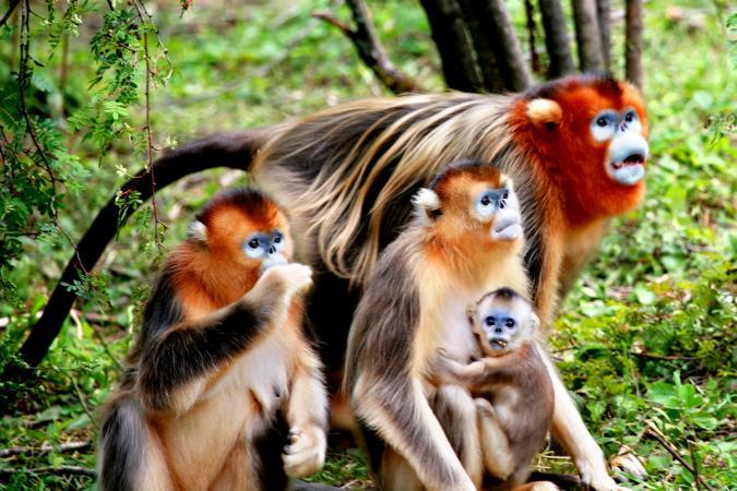 Shennongjia National Park