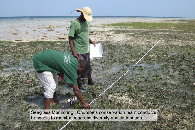 Seagrass monitoring