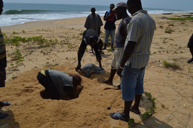 E. Aruna, Reptile and Amphibian Program – Sierra Leone