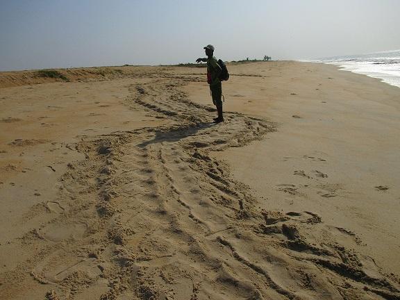 I. Bah, Reptile and Amphibian Program – Sierra Leone