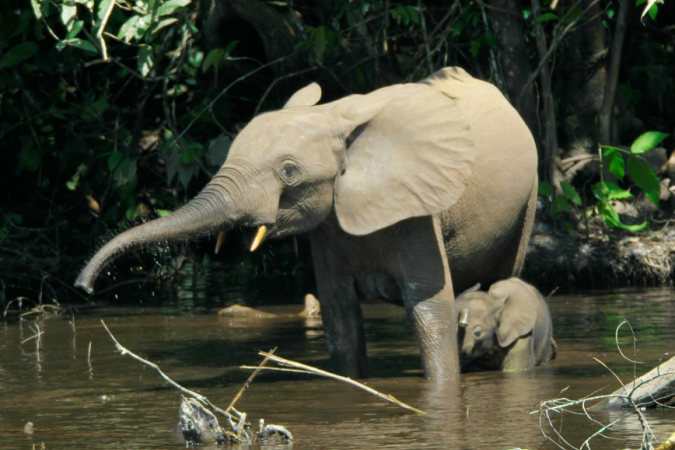 Zooterra & African Forest Elephant Foundation
