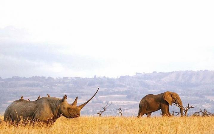 Paolo Parazzi/Lewa Wildlife Conservancy