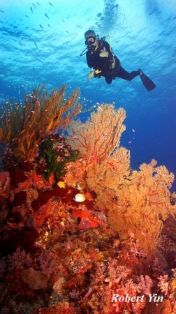 Seascape in Coral Hard Field (© Robert Yin)