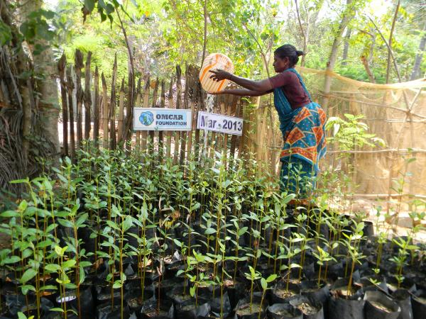 Mangrove Backyard nursery by fisherwomen