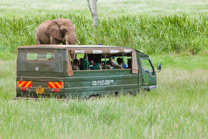 Natalie Solveland/Lewa Wildlife Conservancy