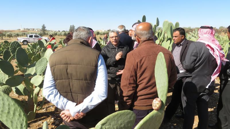 Field day on cactus pear at Mushaqqar station Jordan.