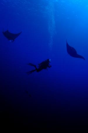 Manta rays (© TMO)