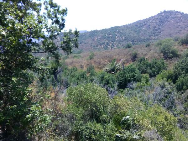 Fundacion para la recuperacion de la Palma Chilena y el bosque nativo