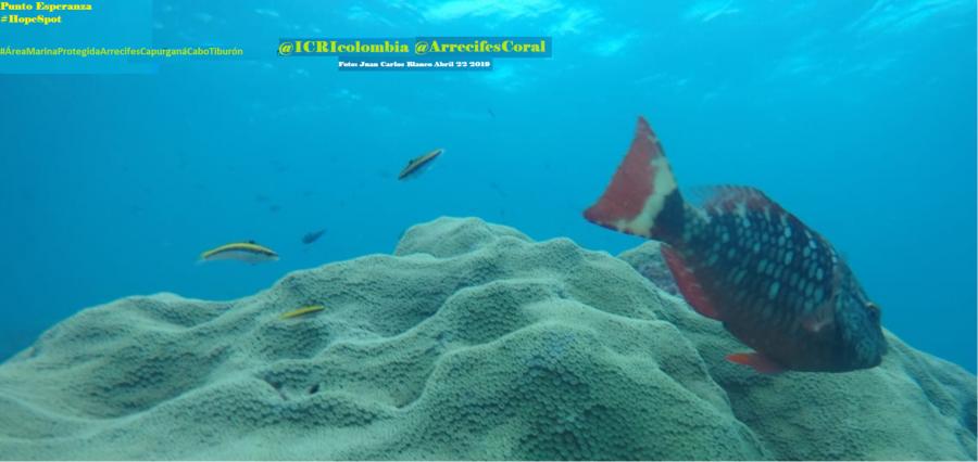 Fundación ICRI Colombia/ Observatorio Arrecifes Coral