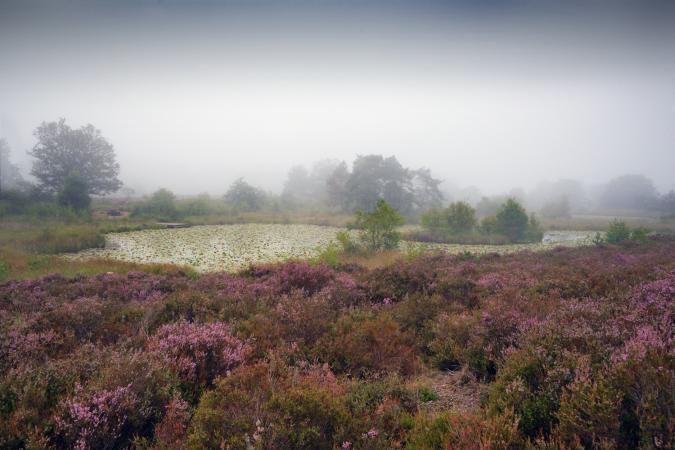 Landscape in the National Park