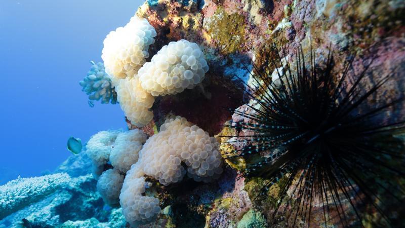 Open Boat Films / NOAA