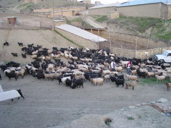 Konegummez Village