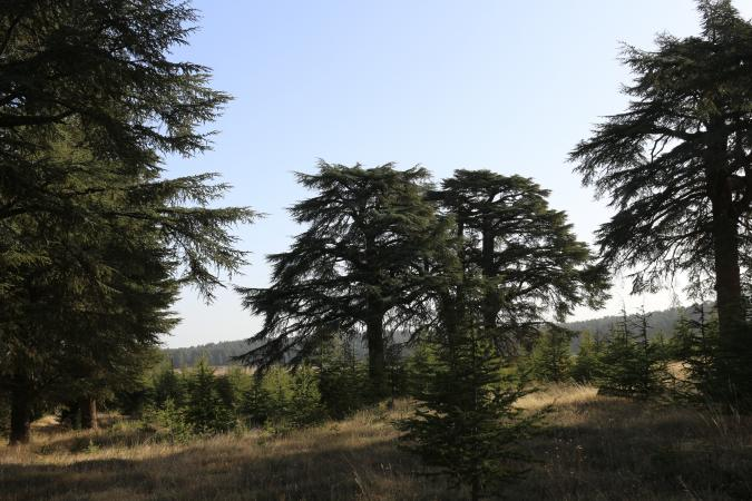 Parc National d'Ifrane