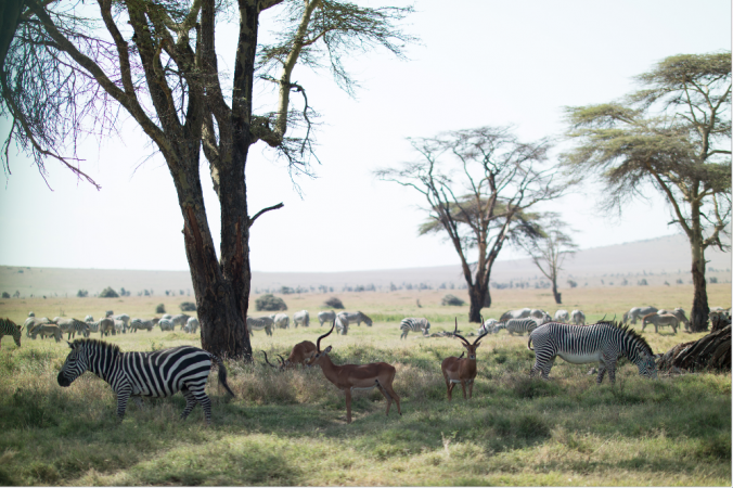 Erico Hiller/Lewa Wildlife Conservancy