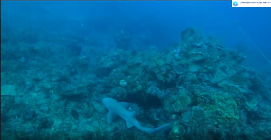 Dive and Green, Observatorio Arrecifes Coral