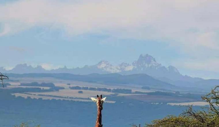 Ian Lemaiyan/Lewa Wildlife Conservancy