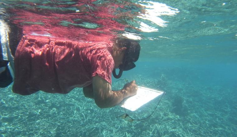 Palau International Coral Reef Center