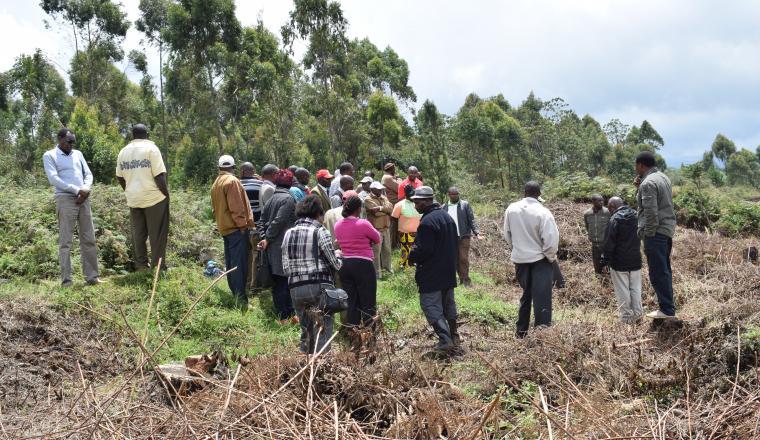 Kijabe Environment Volunteers