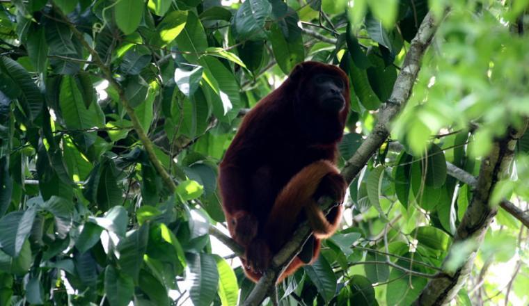 Parques Nacionales Naturales Colombia
