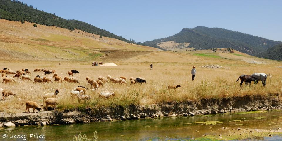 Parc National d'Ifrane et Association Karfour