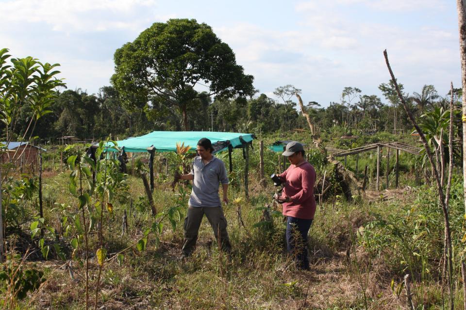 Sociedad Colombiana de Cycadas