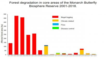 Fondo Monarca