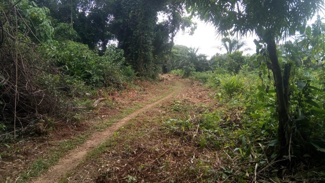 Vue d'une partie de la route Ikela réhabilitée
