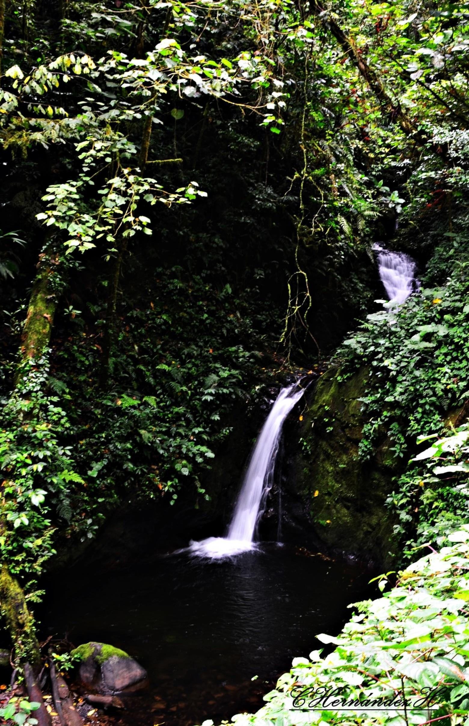Cascada Cuecha, Reserva Monteverde, Costa Rica