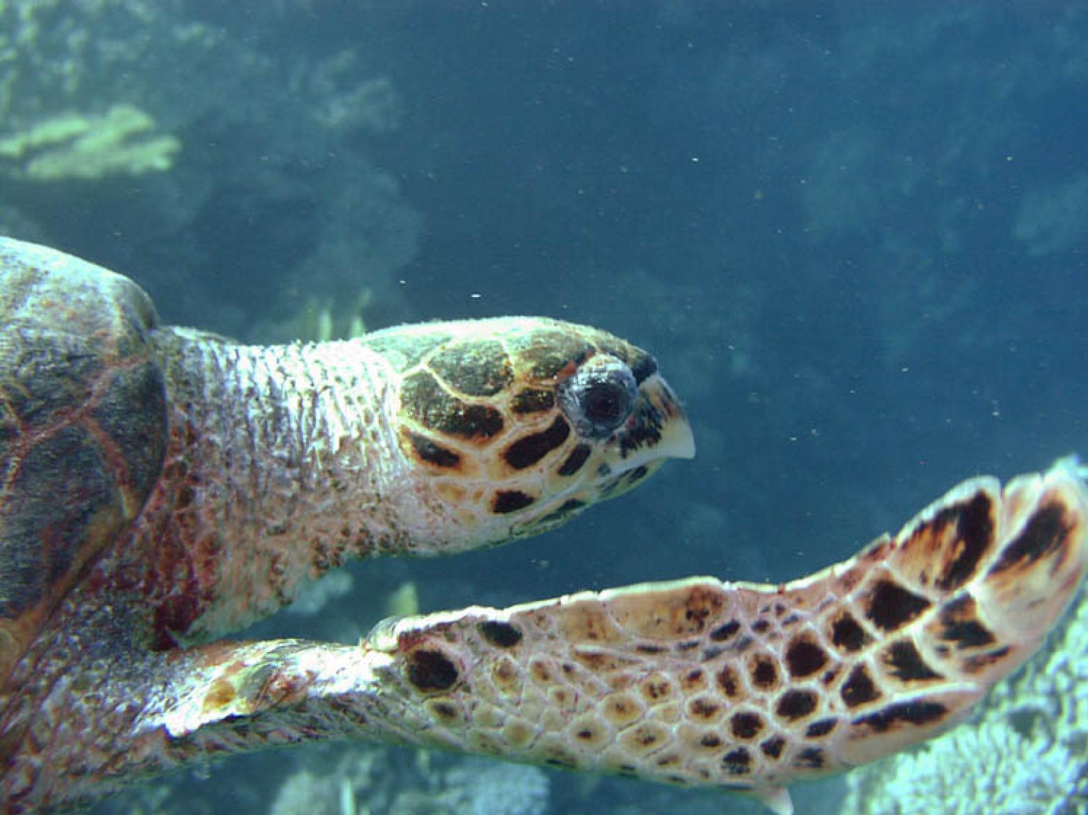 Marine turtle © IUCN Christian Laufenberg