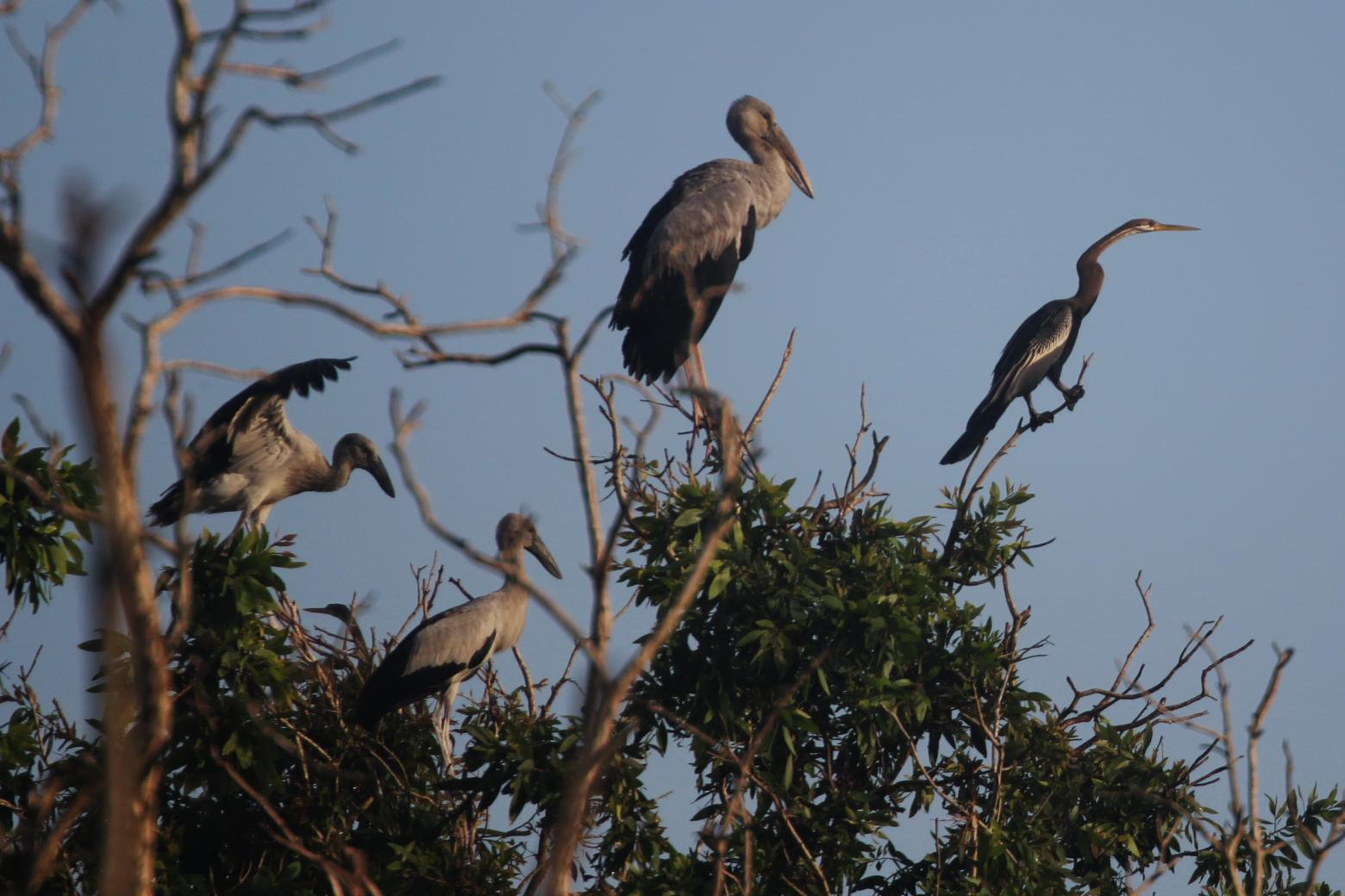 Rich in biodiversity: U Minh Thuong National Park. Copyright Sharon Brown.