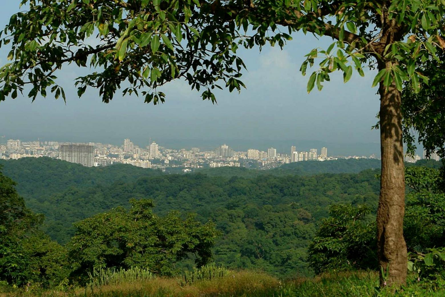 Mumbai, seen from Sanjay Gandhi National Park © Sunjoy Monga