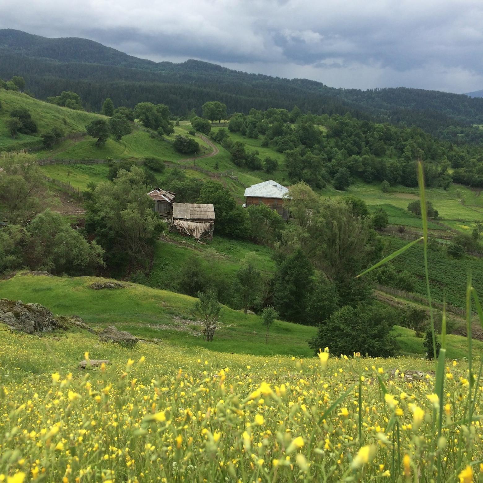 ecfcaucasus.org