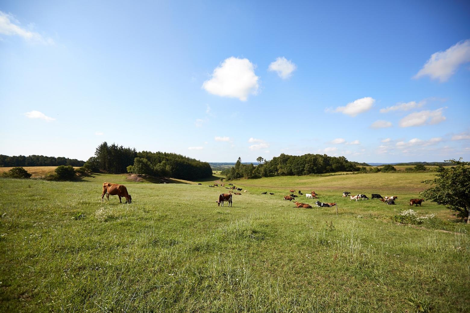 Organic Denmark