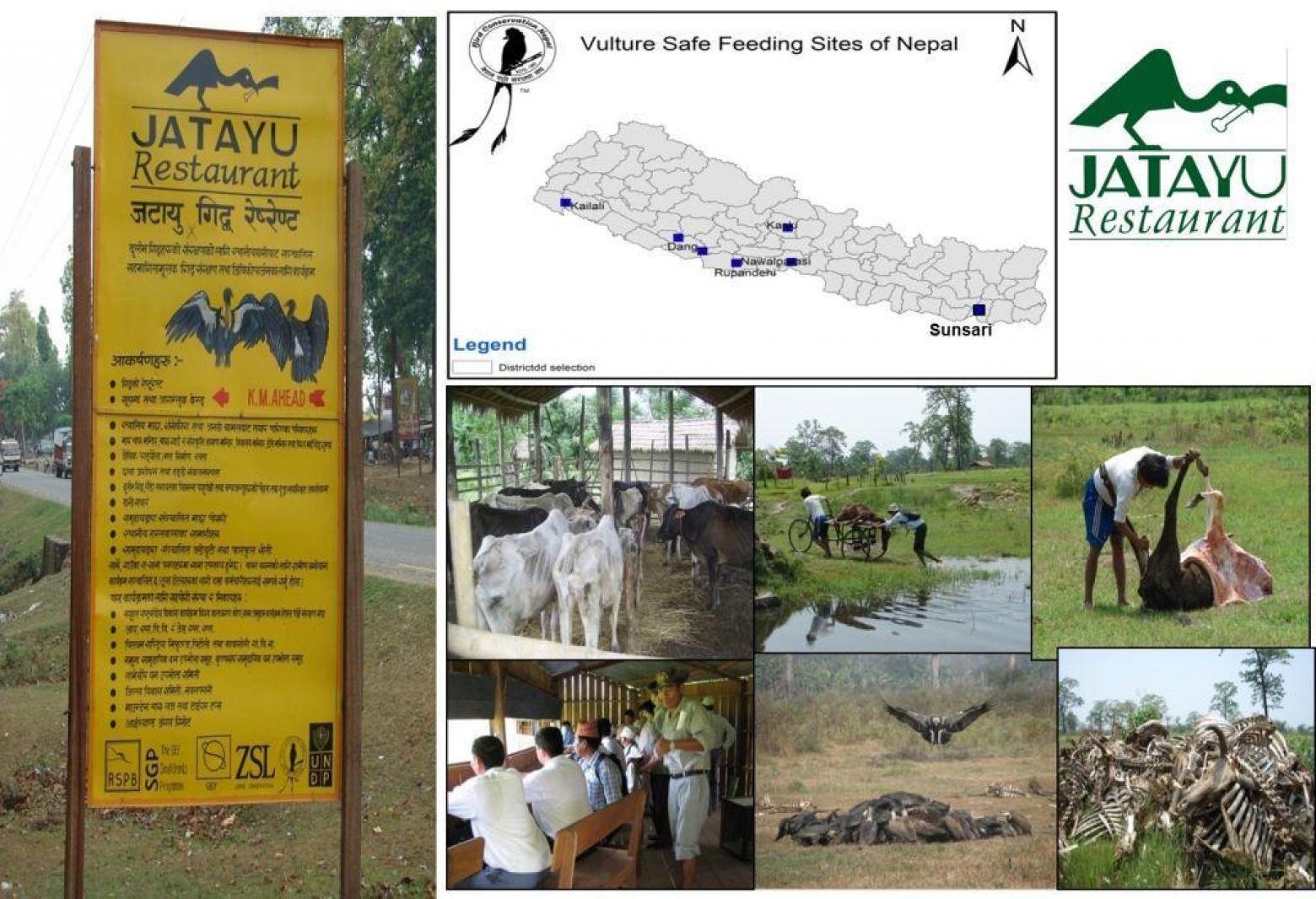 Bird Conservation Nepal